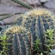 Kaktus als Symbol für Energetischen Selbstschutz
