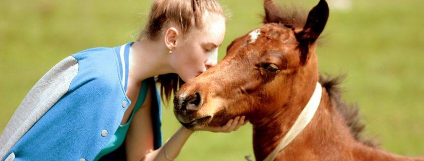 Foto zu einem Feedback einer Prana Anwendung bei einem Pferd mit Stauballergie