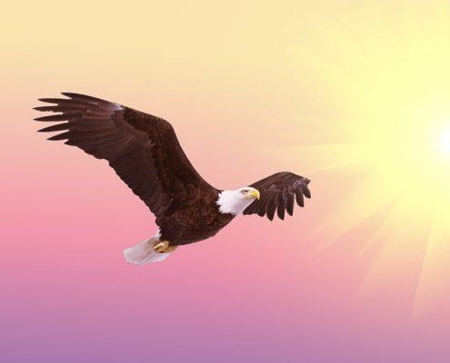 Der Adler symbolisiert, still zu sein