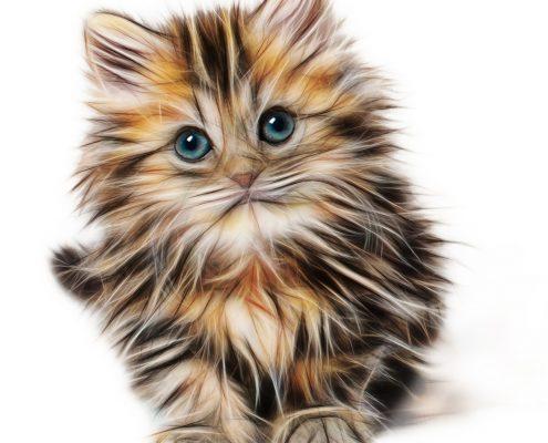 Katzenbild zu dem Feedback Erfolg bei Tierhaarallergie