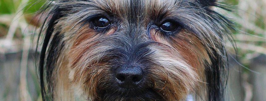 Prana Erfolgsstory Hund