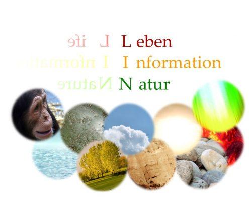 LIN - Schnellheilung Jana Thann, LIN Anwendungen